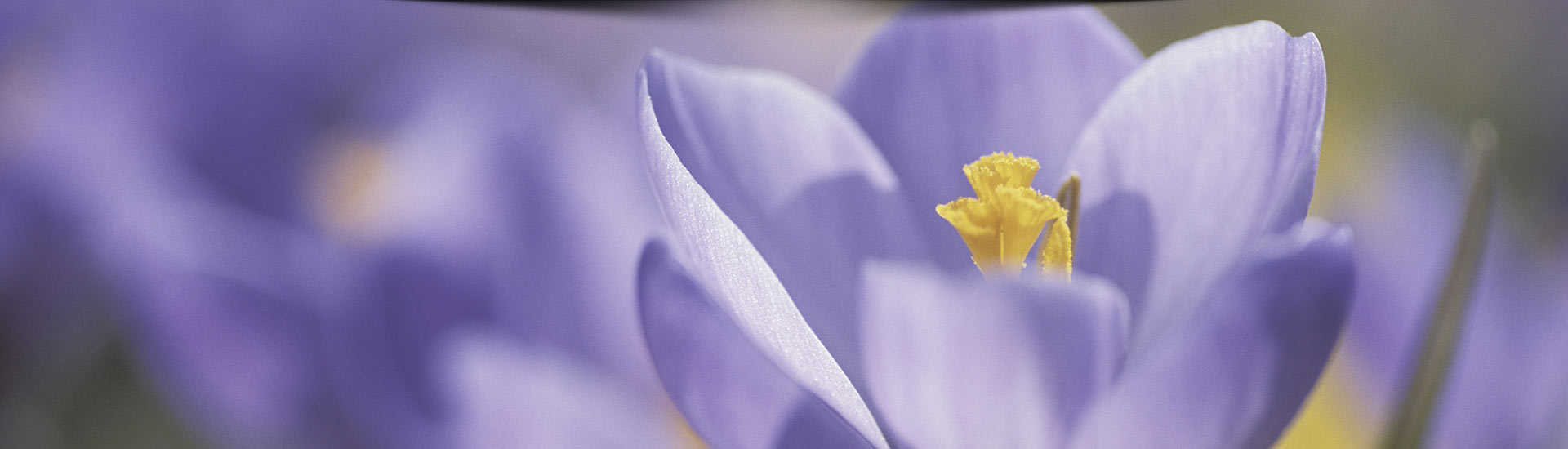 blomsteraffär örebro centrum